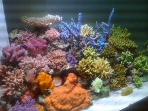 ecosystem reef