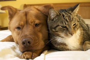 article-cat-dog-coexisting.ashx