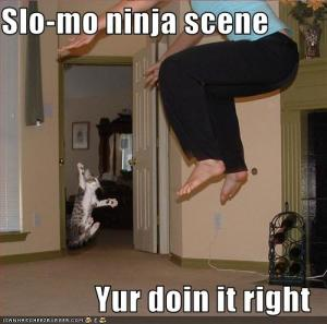Cat-slow-kotion-ninjas-scene
