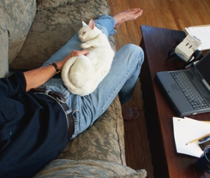 Man with cat curled on his lap, working from home