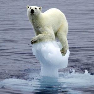 polar17