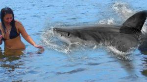 shark19