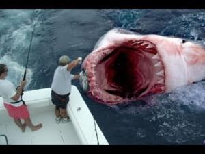 sharks24