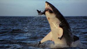 sharks25