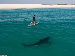 sharks26