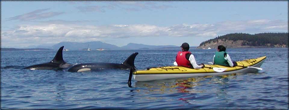 Harbor Town Dolphin Tours