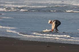 oceanbeach13fisherman