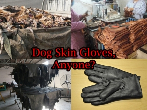 chinesedog3gloves