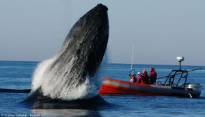 whales18